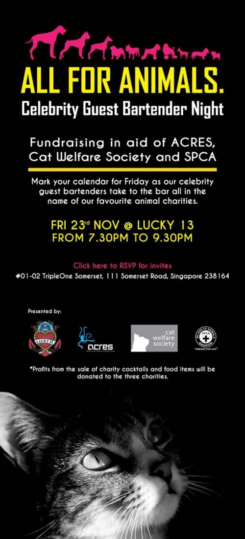 Fundraising in aid of acres cat welfare society and spca