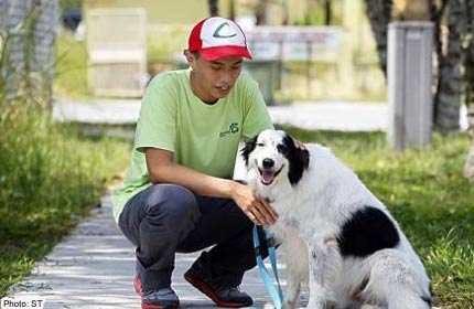 Animal lovers with no pets volunteer at shelters