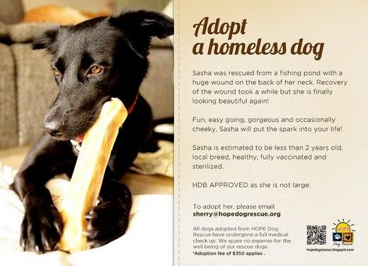 Adopt A Homeless Dog