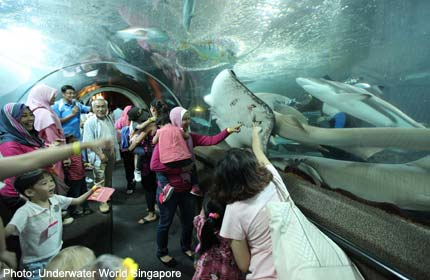 Mums with special-needs children celebrate at Underwater World Singapore