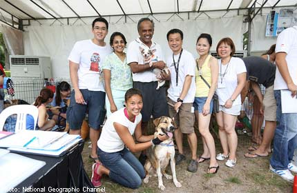 NatGeo's adoption drive sees 6,000 people and 450 dogs attend
