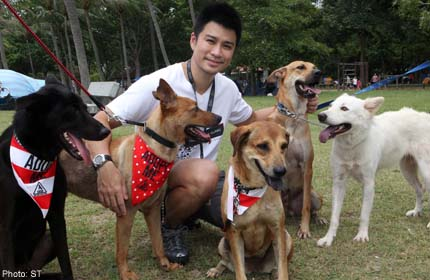 Rescuing stray dogs changed doc's life