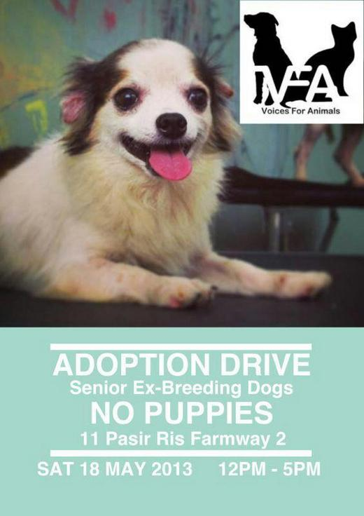 Voices For Animals Adoption Drive (18 May 2013)