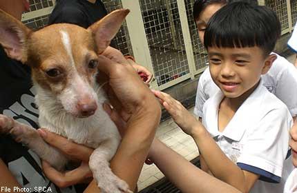 SPCA ramps up fundraising